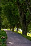 Bench in shade of linden trees. Uzh river embankment in summer Stock Image