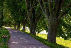 Bench in shade of linden trees. Uzh river embankment in summer Royalty Free Stock Photography