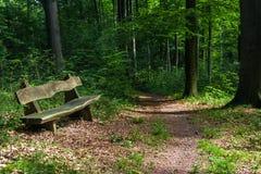 bench skogen Arkivfoto