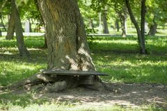bench skogen royaltyfri bild