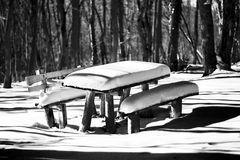 Bench with snow in forest Stock Images