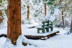Bench in a snowy forest, on a hiking trail, after a snowstorm in Vancouver Delta BC, at Burns Bog. Evergreen tree trunk and. Raised platform with bench royalty free stock images