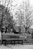 Bench. Solitary bench in the park, during a cold fall evening Royalty Free Stock Photo