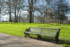 Bench in the spring. A bench with yellow flowers in the spring Royalty Free Stock Image