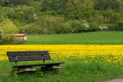 Bench in spring Stock Photography