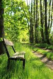 Bench in the spring forest Stock Photo