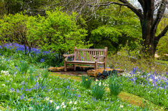 Bench in the spring garden royalty free stock photography