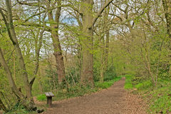 Bench in spring woodland Stock Images
