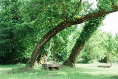 Bench in a stunning forest underneath some trees Stock Photography