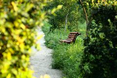 Bench by the summer park Royalty Free Stock Image