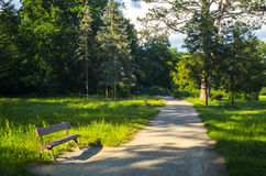 Bench in the Summer Park Stock Image