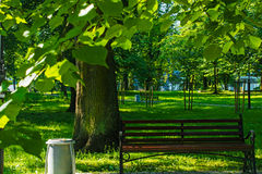 Bench in summer park in frame of leafs. nature background Royalty Free Stock Photo