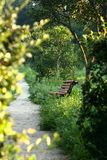 Bench by the summer sunny park Royalty Free Stock Photo
