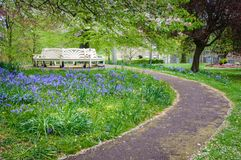 Bench surrounded by bluebells. White park bench surrounded by bluebells and trees Royalty Free Stock Photography