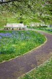 Bench surrounded by bluebells. White park bench surrounded by bluebells and trees Stock Photo