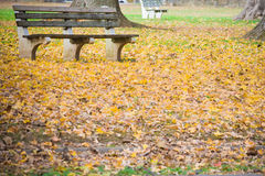 Bench Surrounded by Fallen Leaves in the Park Royalty Free Stock Photo