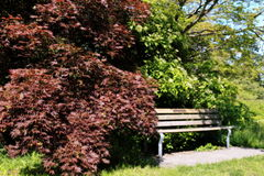 Bench. A bench surrounded trees and bushes making it look cozy at Queen Elizabeth Park, Canada Royalty Free Stock Photos