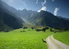 Bench in Switzerland. Bench in green meadow in Switzerland Stock Images