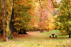 Bench and table in the forest in autumn Stock Images