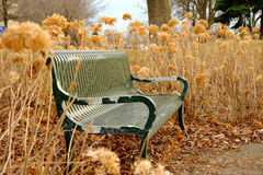 Bench in tall grass Royalty Free Stock Images