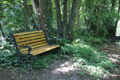 Bench, Thicket, undergrowth, with wood in a mystic wood Royalty Free Stock Image