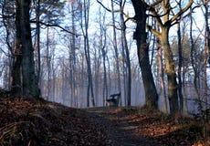 bench trä Arkivbild