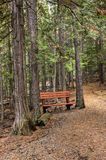 Bench by trail. Stock Photography