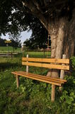 Bench on the tree. Wooden bench by the tree in the sundown in algau / bavaria / germany Stock Photos