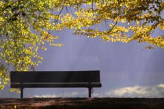 Bench and tree. Brown bench, blue sky and green tree Stock Photos