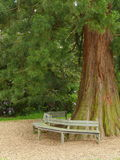 Bench beside tree Royalty Free Stock Photo