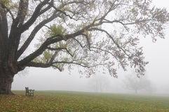 Bench and Tree in Autumn Fog. An empty bench next to an old tree in the autumn fog Royalty Free Stock Images