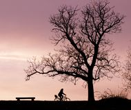 Bench Tree and Bicycle Silhouette Stock Photography