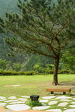Bench and tree in park. A view of a small bench and evergreen tree in a park Stock Image
