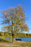 Bench and Tree on the Shore of Lake Cenaiko. This is a park bench and a tree on the shore of Lake Cenaiko at the Coon Rapids Dam Regional Park in Minnesota Stock Images