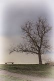Bench and Tree Silhouette HDR Stock Photography