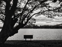 bench treen Arkivfoto