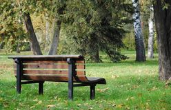 Bench and trees in the park. Wooden bench, trees and grass with fallen leaves in the park in Autumn royalty free stock photography
