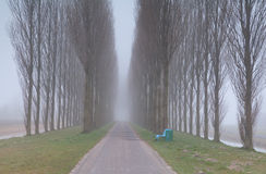 Bench and tunnel between trees in fog Royalty Free Stock Images