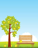 Bench under aple tree Stock Images