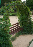 Bench. A bench under an arc with wild grape vines royalty free stock photo