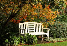 Bench under autumn tree Royalty Free Stock Photos
