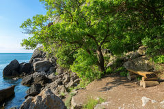 Bench under a beautiful green tree on shore of the bay. Royalty Free Stock Image