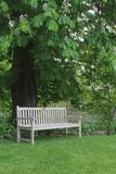 Rustic bench under a blooming chestnut tree Stock Photos