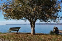 A bench under a tree over looking the sea at a viewpoint in a park stock image