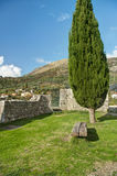 Bench under cypress tree Royalty Free Stock Images