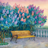 Bench under a flowering lilac Stock Photos