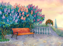 Bench under a flowering lilac Stock Photography