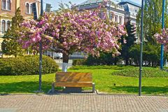 Bench under flowers Royalty Free Stock Images