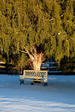 Bench under large conifer tree. Snowy view of empty bench under a large green conifer in the late afternoon royalty free stock images