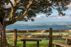 A bench under a large tree overlooking the landscape Royalty Free Stock Photos